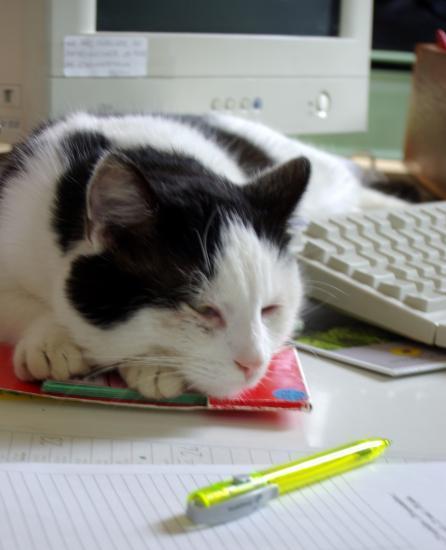"Un petit ""Rat"" de bibliothèque"